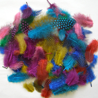 Feathers Brights 2361B