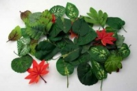 Leaves General Assortment Pack of 50