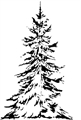 Small Lone Spruce Clarity Stamp FLS8-B